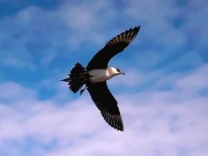 361607__flying-bird_p